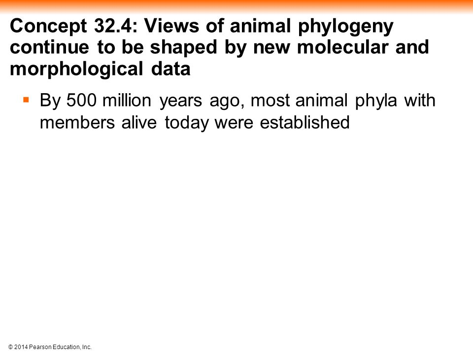 © 2014 Pearson Education, Inc. Concept 32.4: Views of animal phylogeny continue to be shaped by new molecular and morphological data  By 500 million