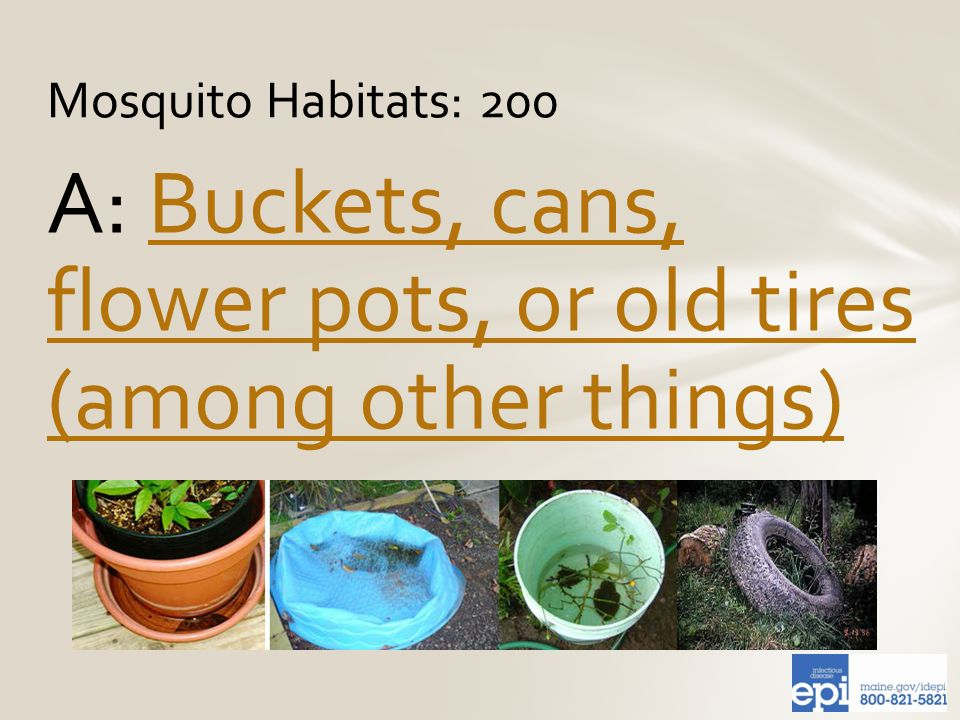 A: Buckets, cans, flower pots, or old tires (among other things)Buckets, cans, flower pots, or old tires (among other things) Mosquito Habitats: 200