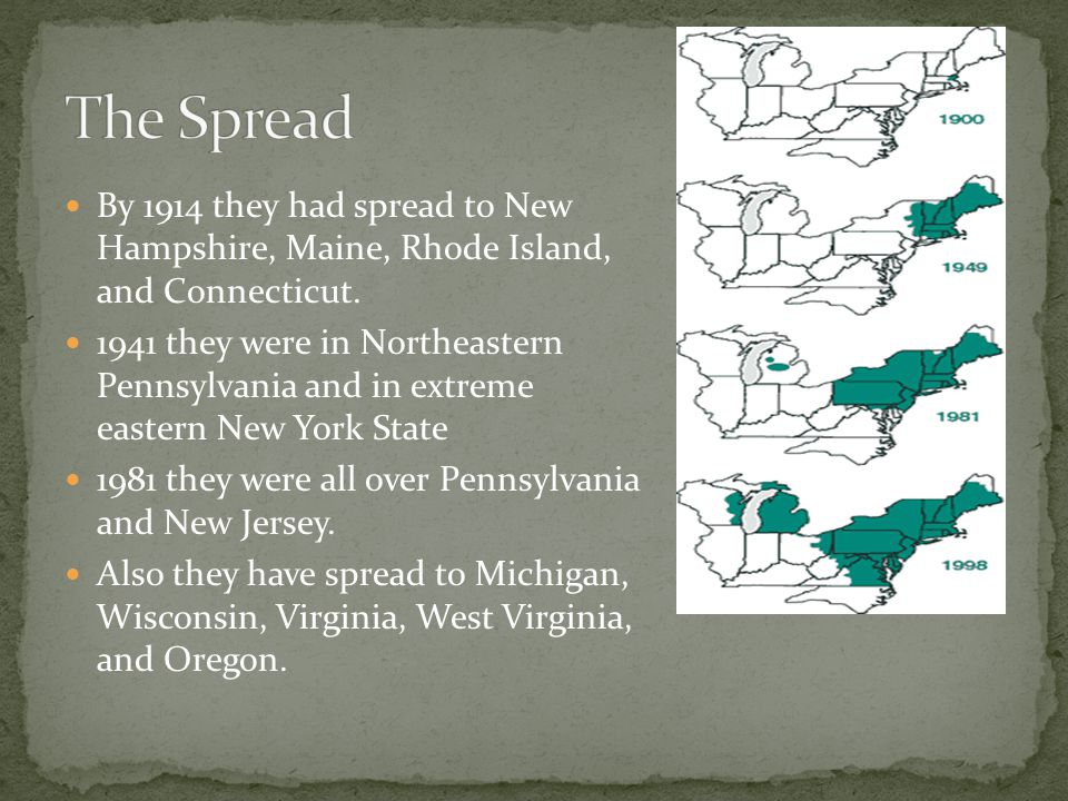 By 1914 they had spread to New Hampshire, Maine, Rhode Island, and Connecticut.