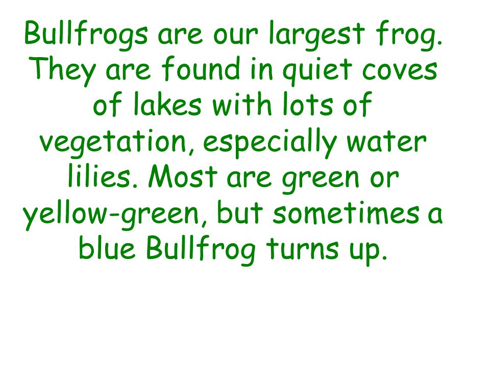 Bullfrogs are our largest frog.