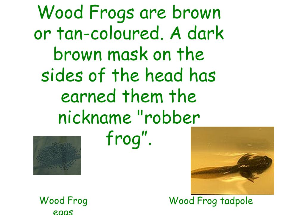 Wood Frogs are brown or tan-coloured.