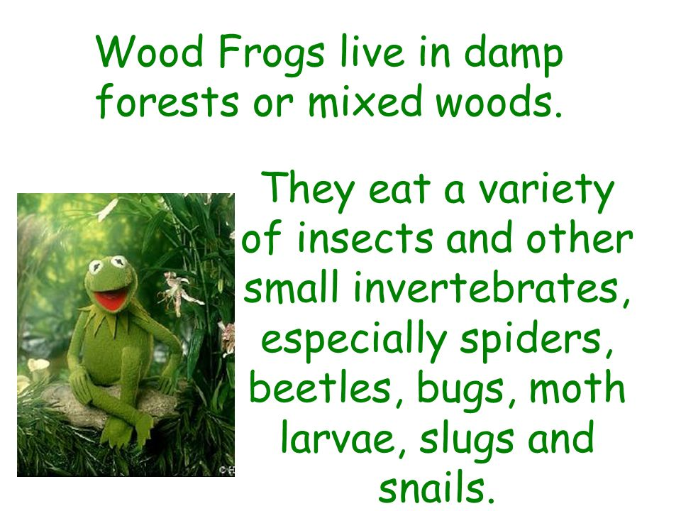 Wood Frogs live in damp forests or mixed woods.
