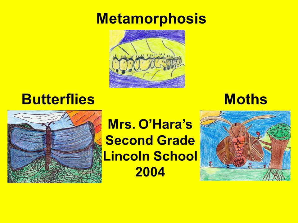Metamorphosis ButterfliesMoths Mrs. O'Hara's Second Grade Lincoln School 2004