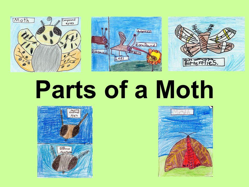 Parts of a Moth