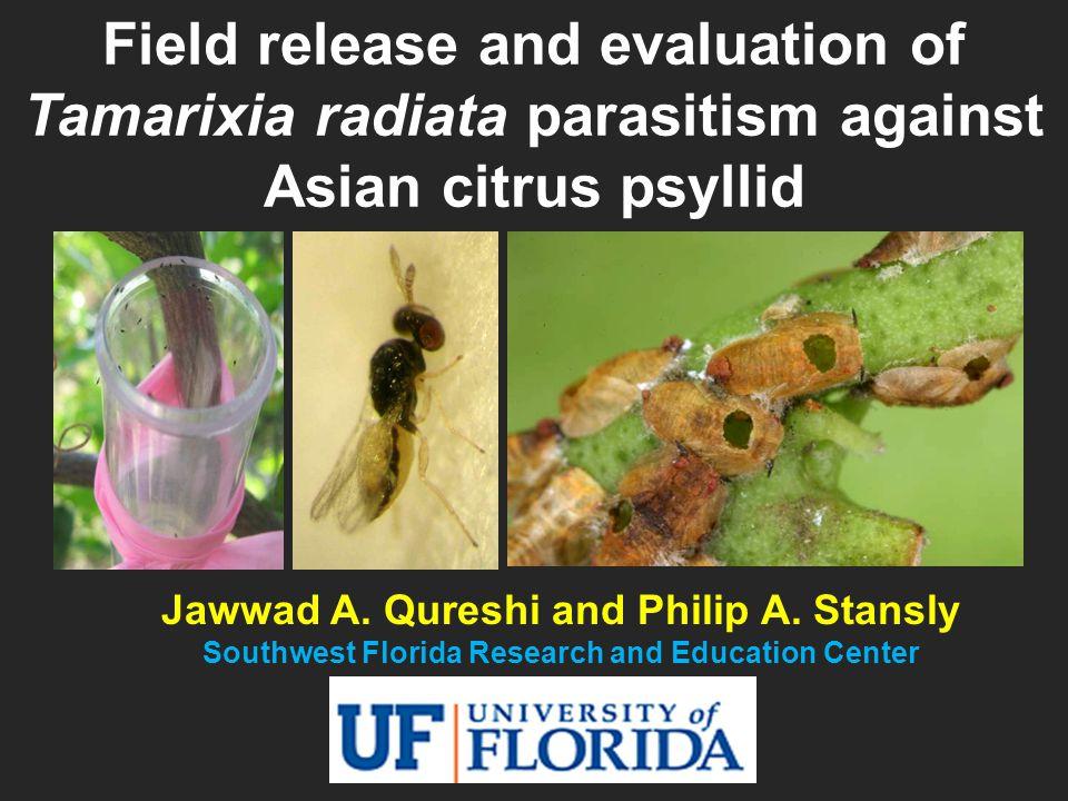 Adult Parasitoid: Tamarixia radiata (Hymenoptera: Eulophidae) Larva Prepupa Egg Mummies M.