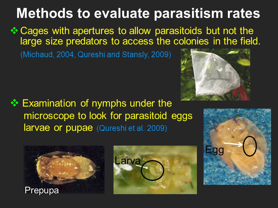 Methods to evaluate parasitism rates  Cages with apertures to allow parasitoids but not the large size predators to access the colonies in the field.