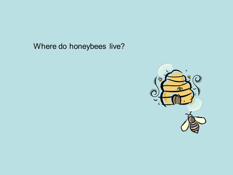 Where do honeybees live?
