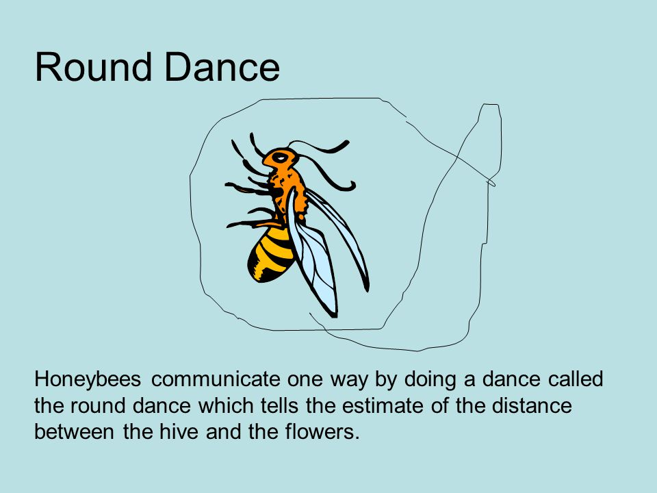 Honeybees communicate one way by doing a dance called the round dance which tells the estimate of the distance between the hive and the flowers. Round