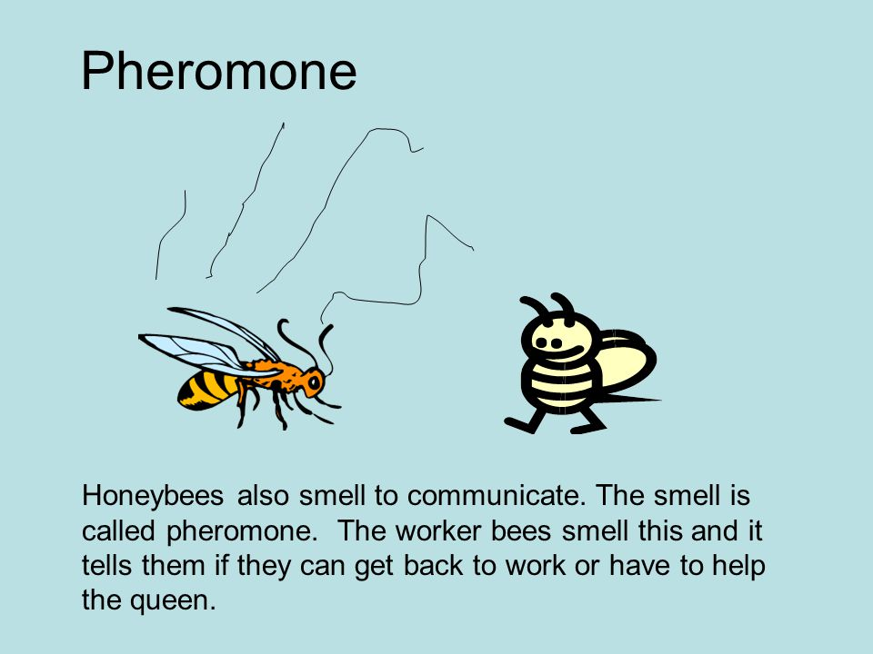 Honeybees also smell to communicate. The smell is called pheromone. The worker bees smell this and it tells them if they can get back to work or have
