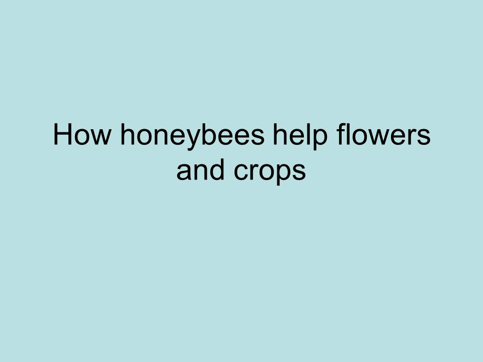 How honeybees help flowers and crops