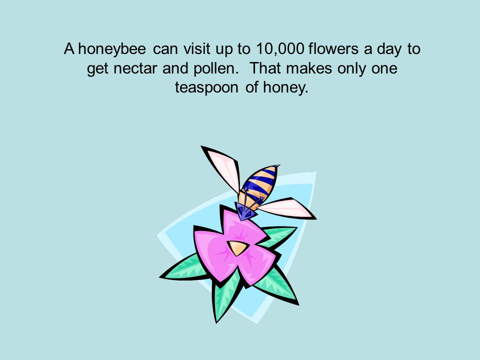 A honeybee can visit up to 10,000 flowers a day to get nectar and pollen. That makes only one teaspoon of honey.