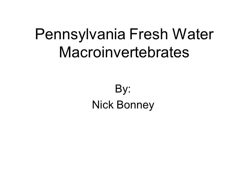 Pennsylvania Fresh Water Macroinvertebrates By: Nick Bonney