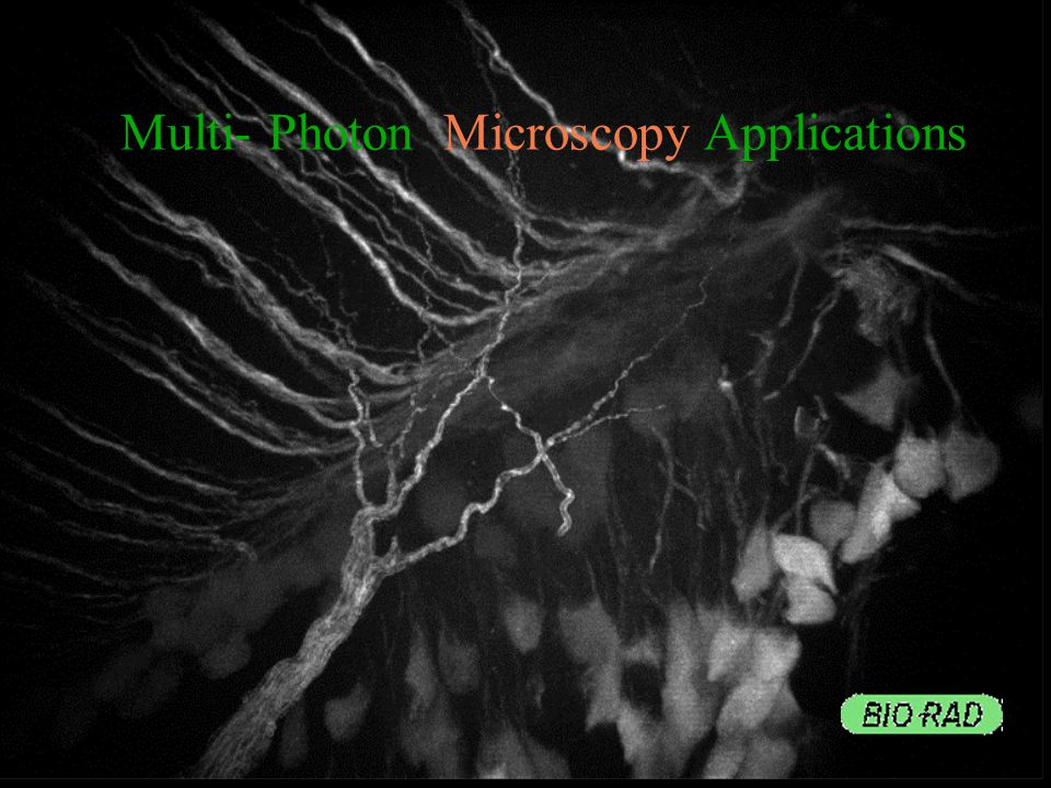 MULTI-PHOTON APPLICATIONS Calcium and Physiology Neurobiology Developmental Biology GFP Plants