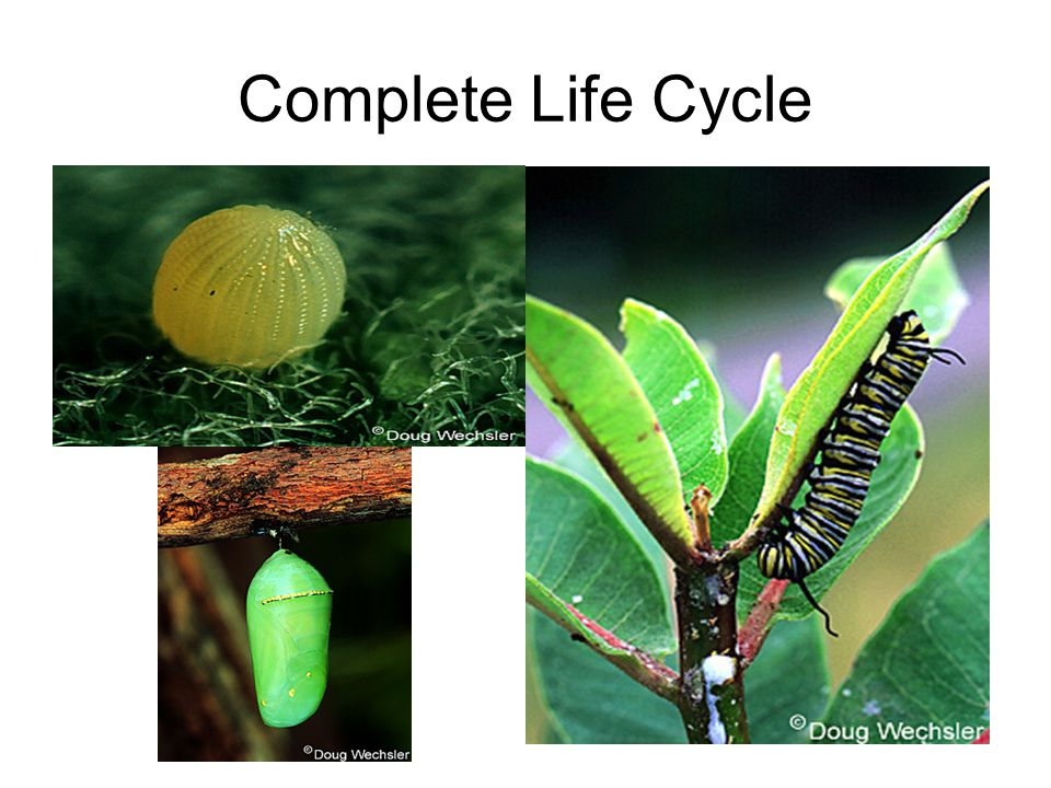 Complete Life Cycle