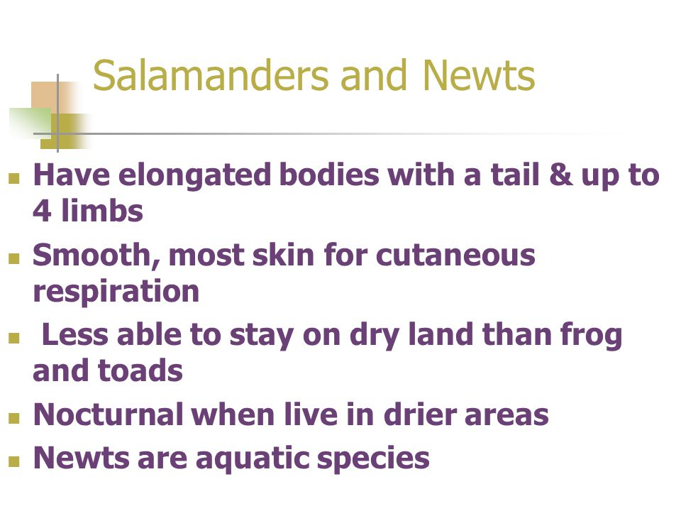 Salamanders and Newts Have elongated bodies with a tail & up to 4 limbs Smooth, most skin for cutaneous respiration Less able to stay on dry land than frog and toads Nocturnal when live in drier areas Newts are aquatic species