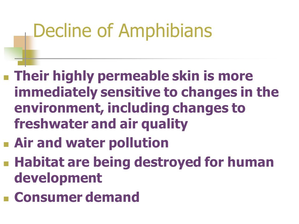 Decline of Amphibians Their highly permeable skin is more immediately sensitive to changes in the environment, including changes to freshwater and air