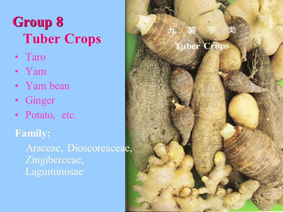 Group 8 Group 8 Tuber Crops Taro Yam Yam bean Ginger Potato, etc.