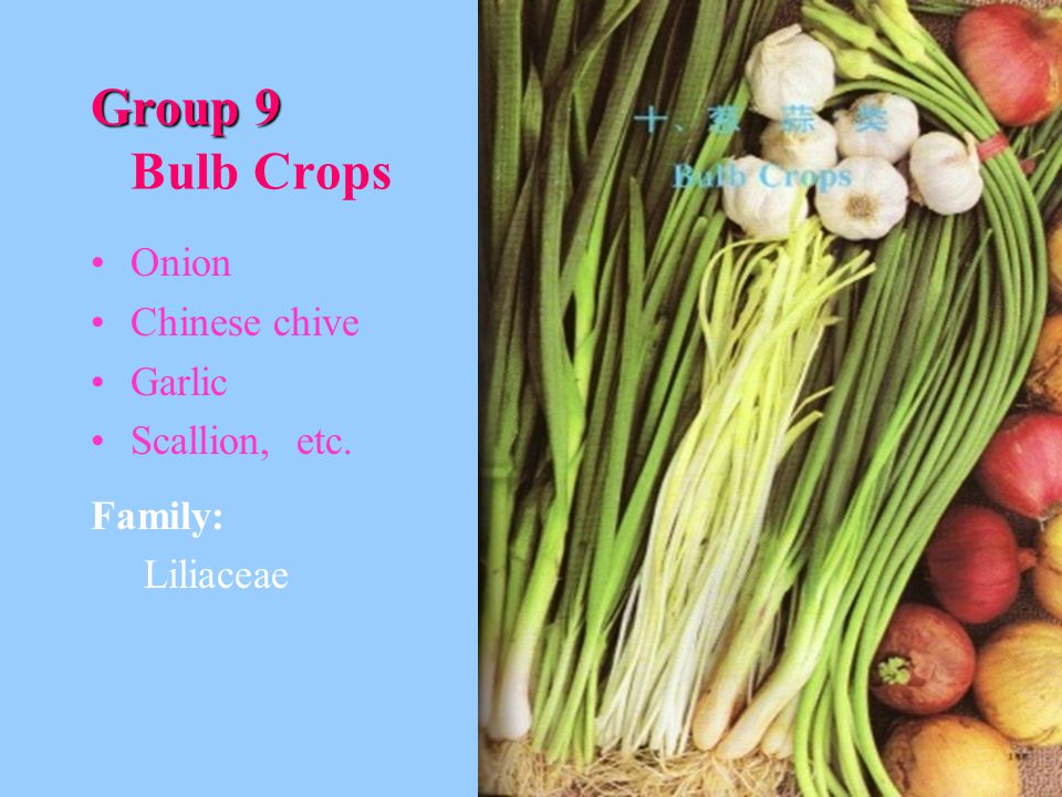 Group 9 Group 9 Bulb Crops Onion Chinese chive Garlic Scallion, etc. Family: Liliaceae