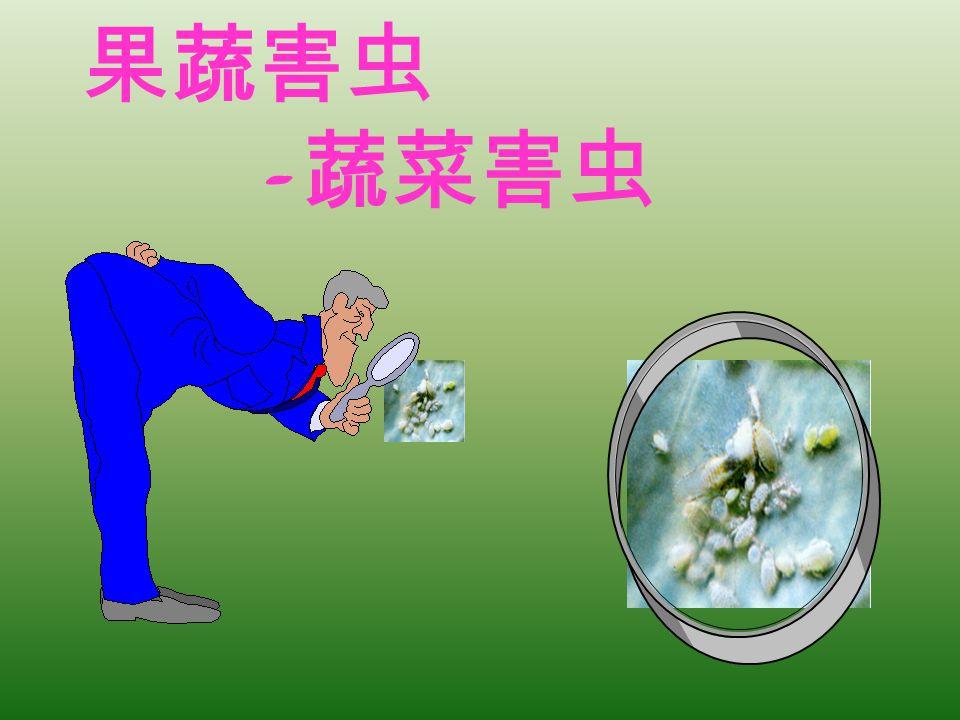 果蔬害虫 - 蔬菜害虫