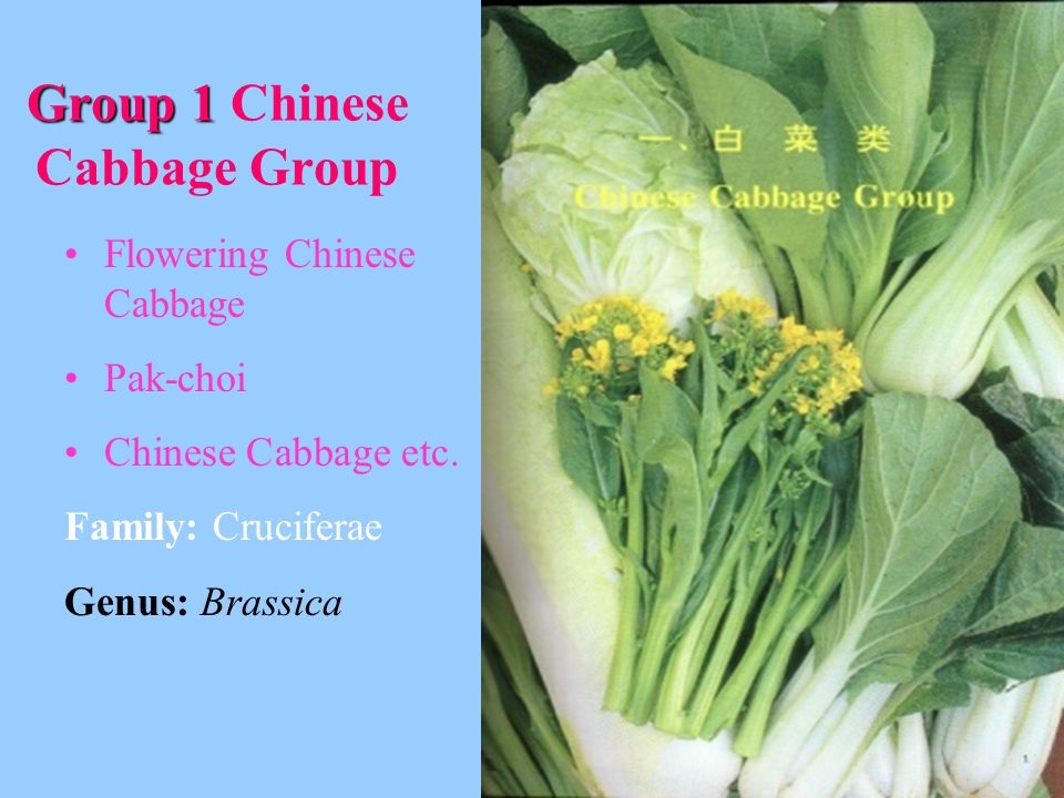 Group 1 Group 1 Chinese Cabbage Group Flowering Chinese Cabbage Pak-choi Chinese Cabbage etc.