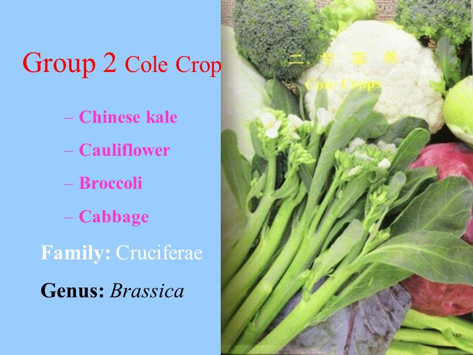 Group 2 Cole Crop –Chinese kale –Cauliflower –Broccoli –Cabbage Family: Cruciferae Genus: Brassica