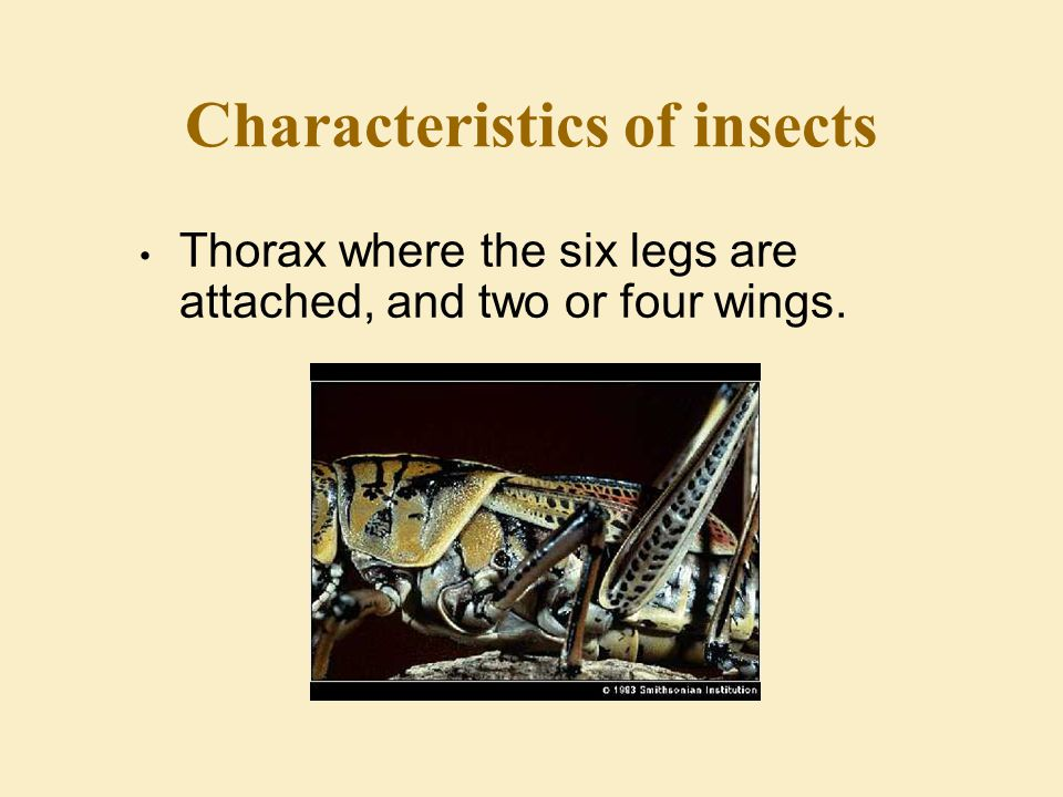 Characteristics of insects The body is divided in three segments:l Head which contains the eyes and the antennae.