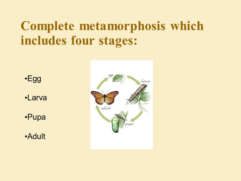 Different kinds of metamorphosis Gradual metamorphosis: the simplest form of metamorphosis.