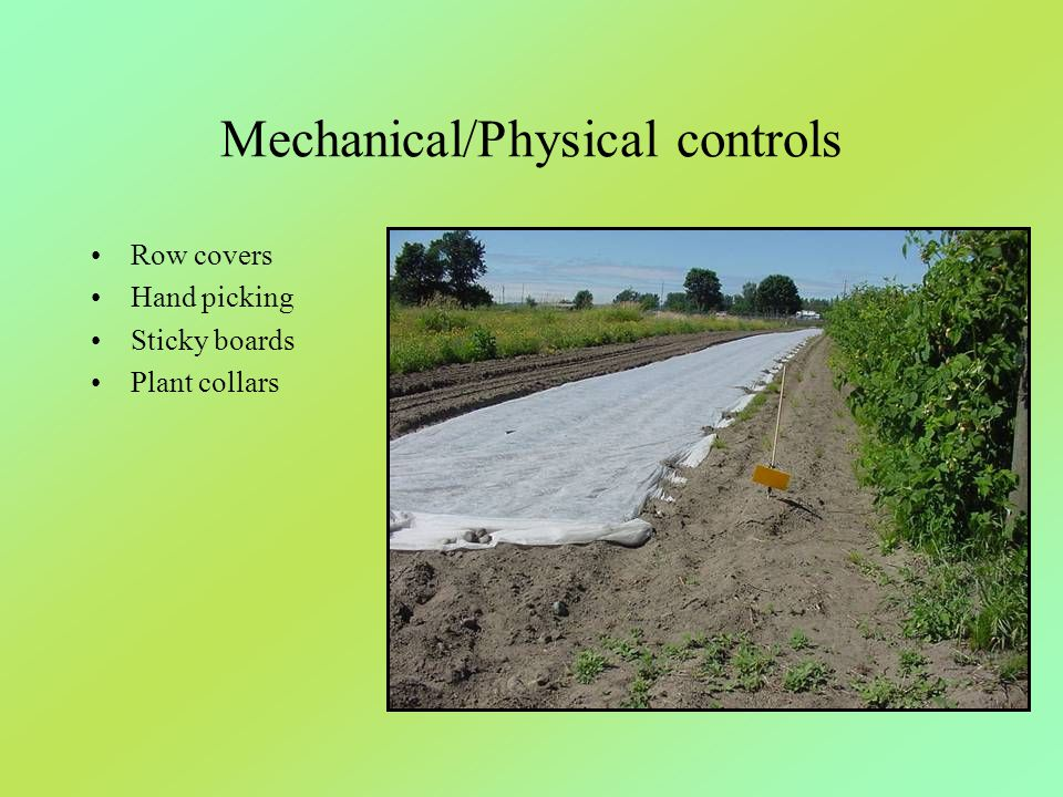 Mechanical/Physical controls Row covers Hand picking Sticky boards Plant collars