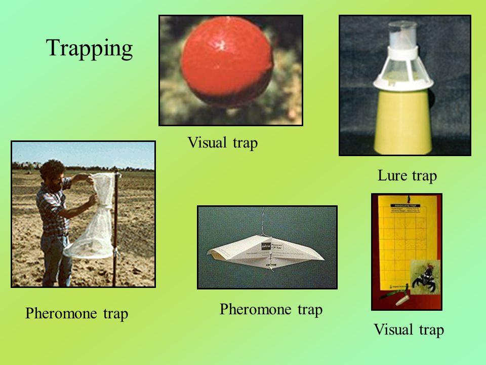 Trapping Lure trap Visual trap Pheromone trap Visual trap Pheromone trap