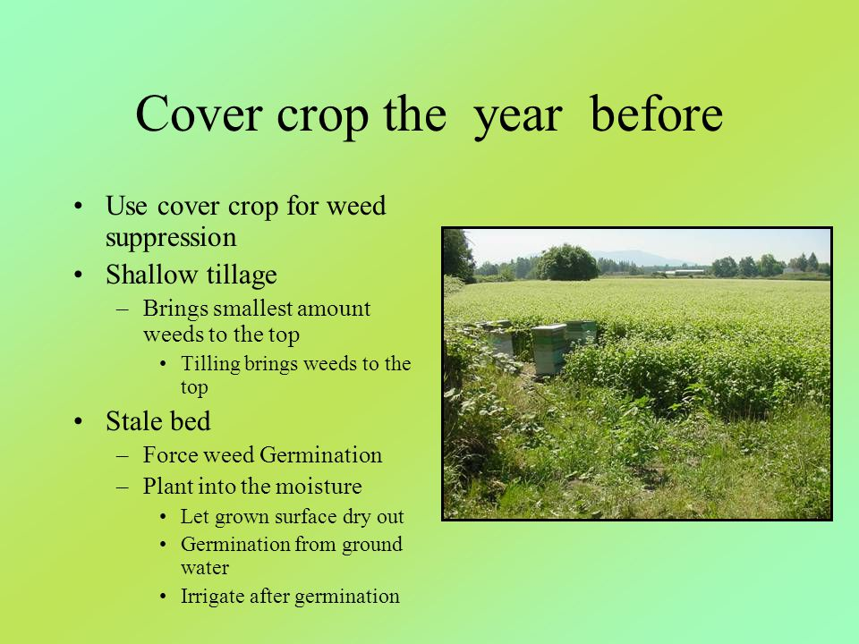 Cover crop the year before Use cover crop for weed suppression Shallow tillage –Brings smallest amount weeds to the top Tilling brings weeds to the to