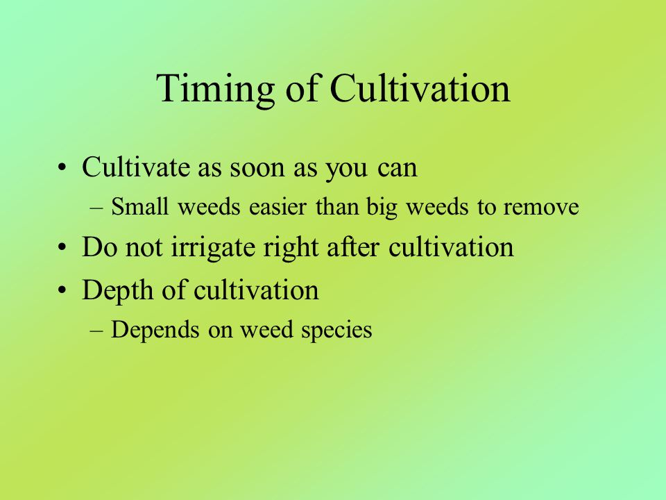 Timing of Cultivation Cultivate as soon as you can –Small weeds easier than big weeds to remove Do not irrigate right after cultivation Depth of culti