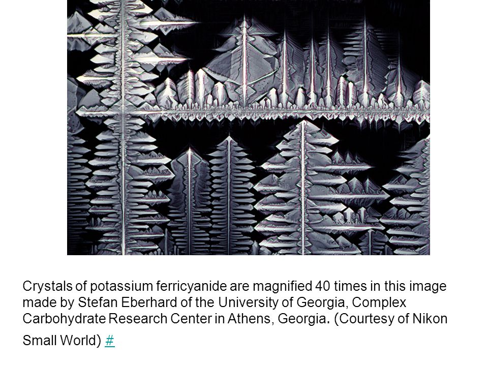Crystals of potassium ferricyanide are magnified 40 times in this image made by Stefan Eberhard of the University of Georgia, Complex Carbohydrate Research Center in Athens, Georgia.