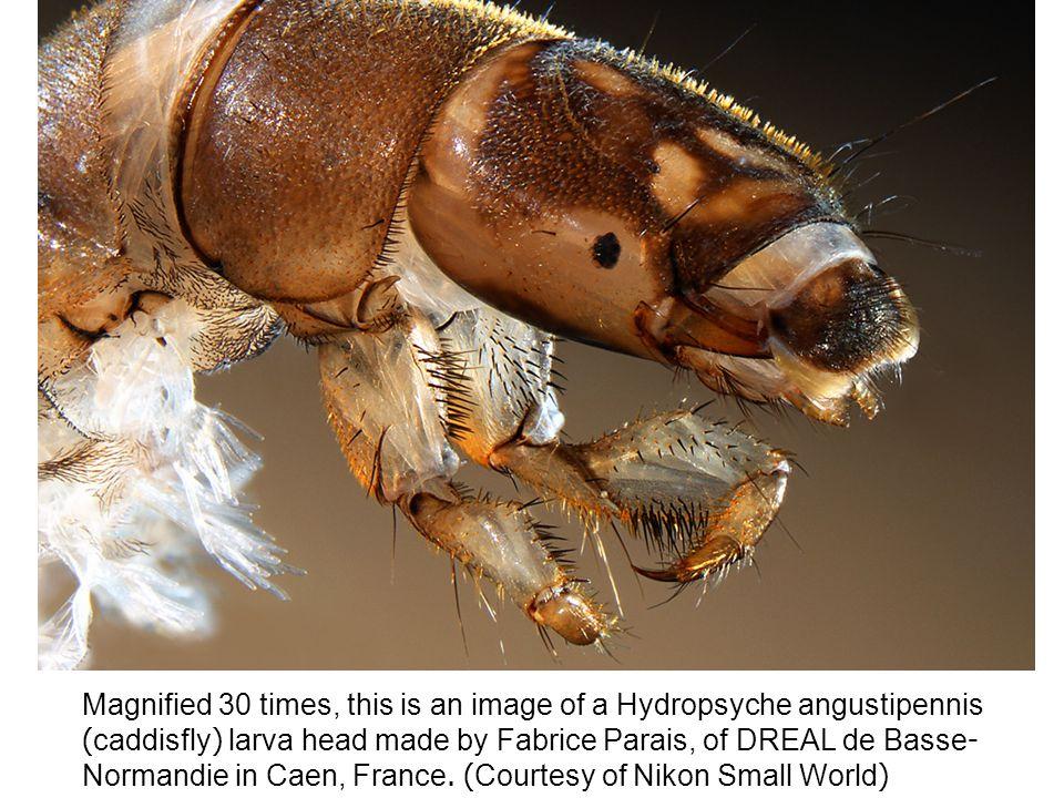 A Bryozoa, a tiny aquatic filter-feeder is seen at 20x magnification.