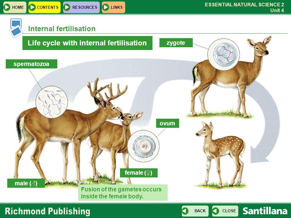 ESSENTIAL NATURAL SCIENCE 2 Unit 4 HOMECONTENTS RESOURCES CLOSE BACK LINKS Internal fertilisation Life cycle with internal fertilisation male (♂) fema