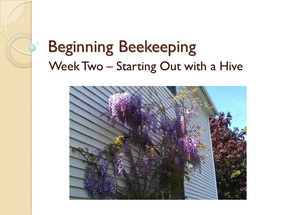 Beginning Beekeeping Week Two – Starting Out with a Hive