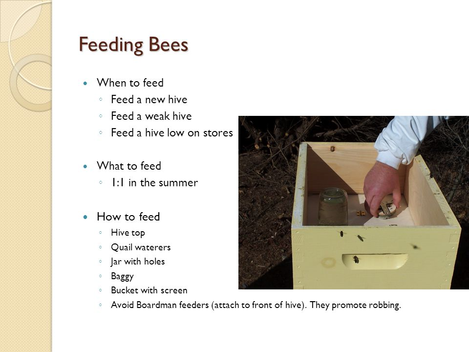 Feeding Bees When to feed ◦ Feed a new hive ◦ Feed a weak hive ◦ Feed a hive low on stores What to feed ◦ 1:1 in the summer How to feed ◦ Hive top ◦ Quail waterers ◦ Jar with holes ◦ Baggy ◦ Bucket with screen ◦ Avoid Boardman feeders (attach to front of hive).