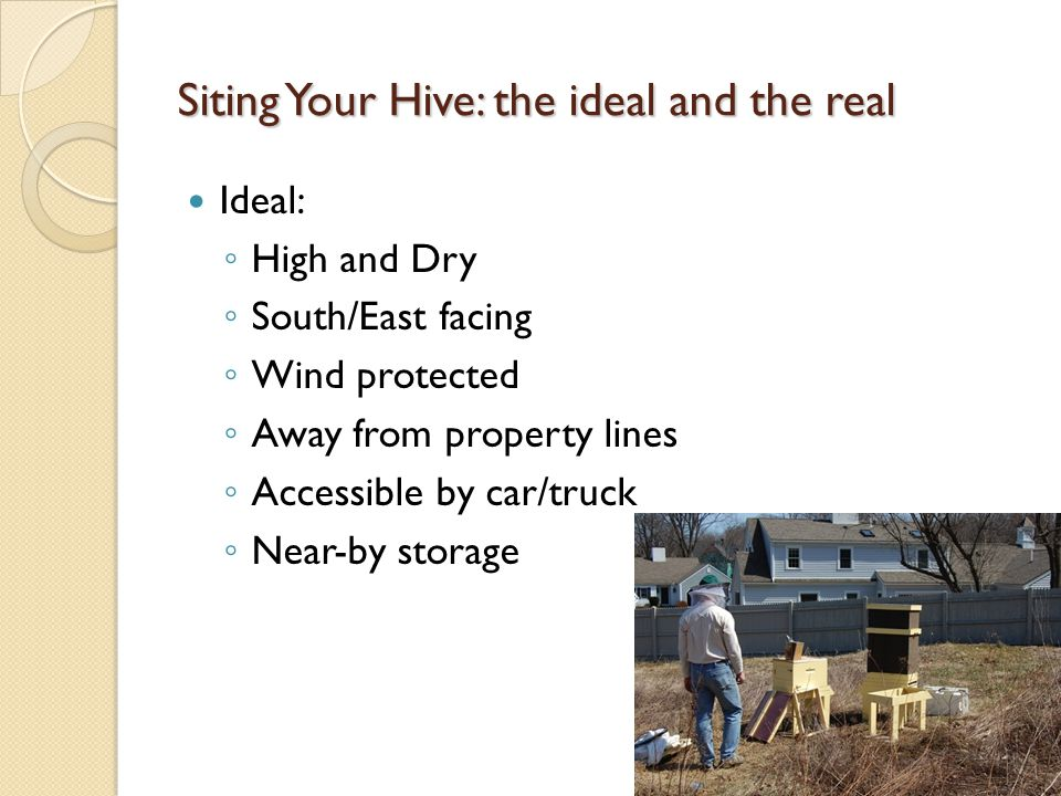Siting Your Hive: the ideal and the real Ideal: ◦ High and Dry ◦ South/East facing ◦ Wind protected ◦ Away from property lines ◦ Accessible by car/truck ◦ Near-by storage