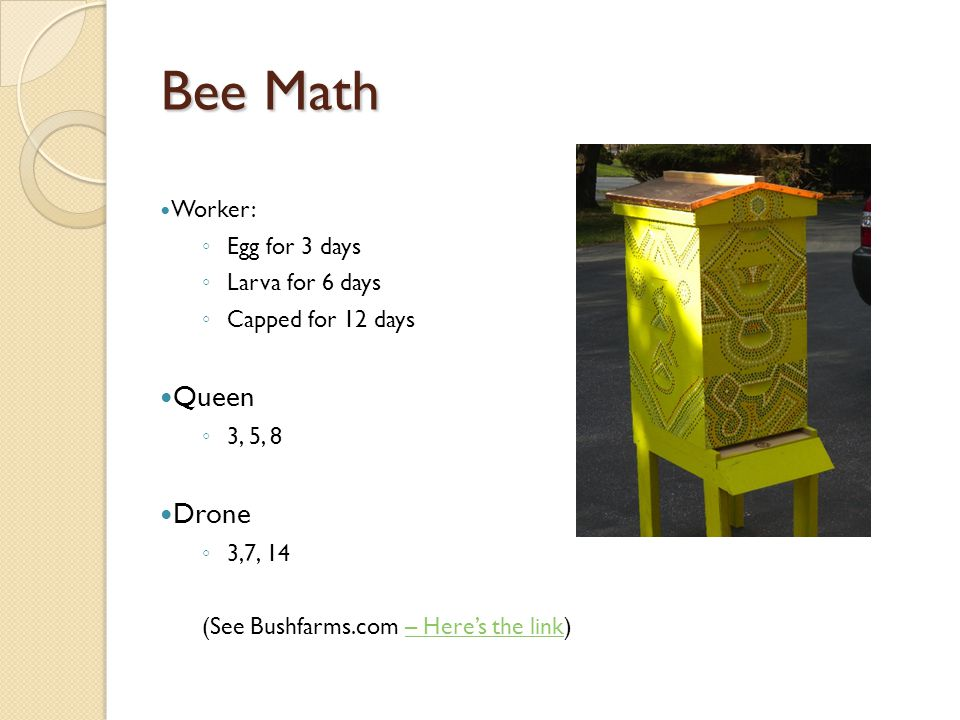 Bee Math Worker: ◦ Egg for 3 days ◦ Larva for 6 days ◦ Capped for 12 days Queen ◦ 3, 5, 8 Drone ◦ 3,7, 14 (See Bushfarms.com – Here's the link)– Here's the link