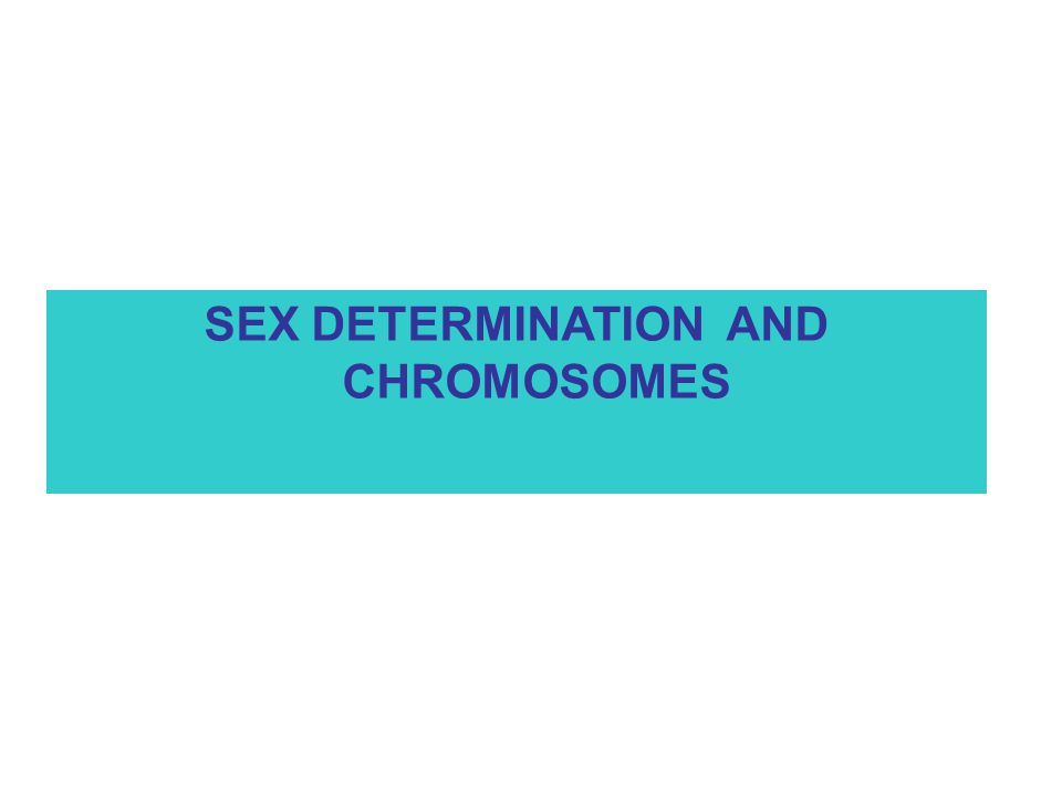 SEX DETERMINATION AND CHROMOSOMES
