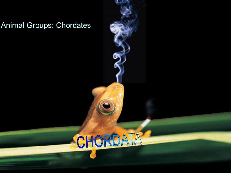 Animal Groups: Chordates