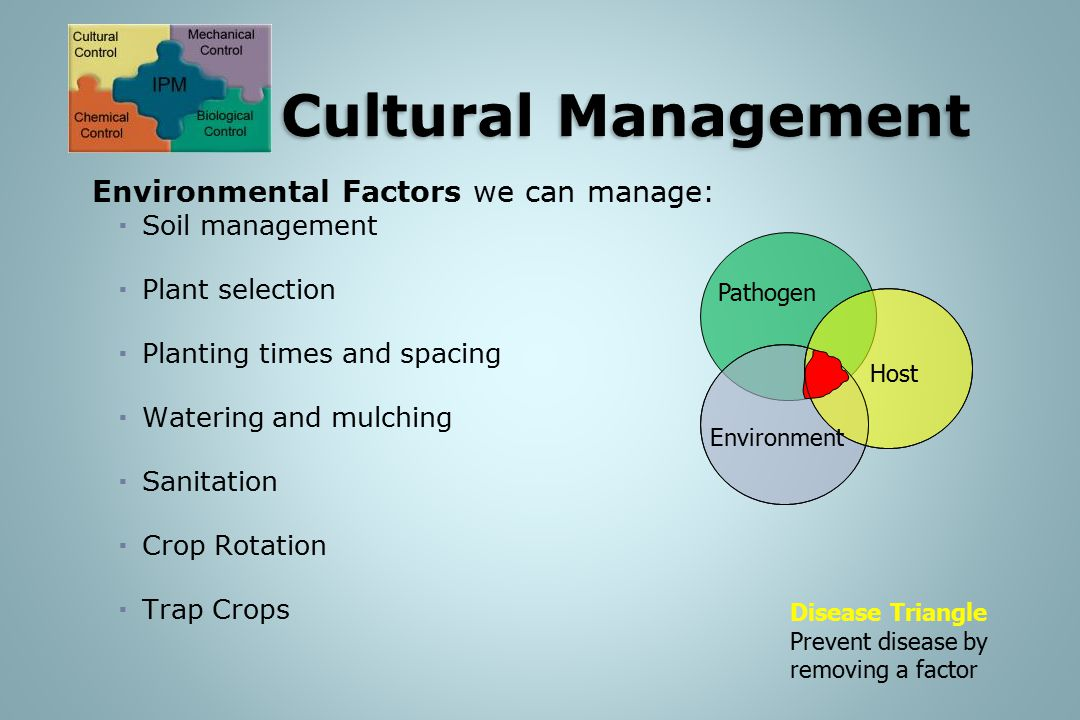 Environmental Factors we can manage:  Soil management  Plant selection  Planting times and spacing  Watering and mulching  Sanitation  Crop Rotation  Trap Crops Environment Pathogen Host Disease Triangle Prevent disease by removing a factor