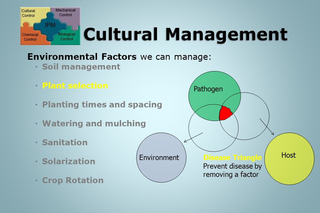 Environmental Factors we can manage:  Soil management  Plant selection  Planting times and spacing  Watering and mulching  Sanitation  Solarizat