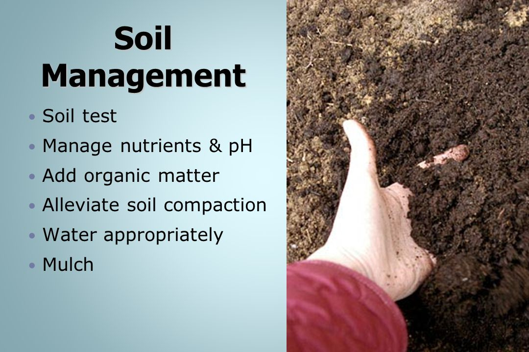 Soil Management Soil test Manage nutrients & pH Add organic matter Alleviate soil compaction Water appropriately Mulch