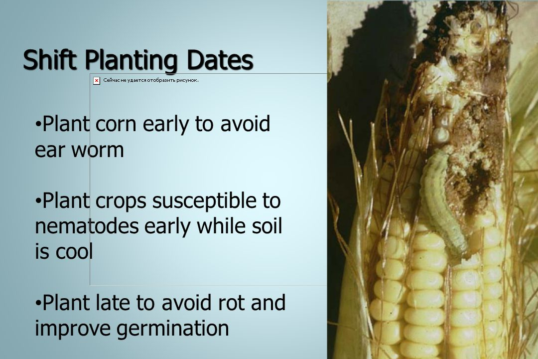 Shift Planting Dates Plant corn early to avoid ear worm Plant crops susceptible to nematodes early while soil is cool Plant late to avoid rot and impr