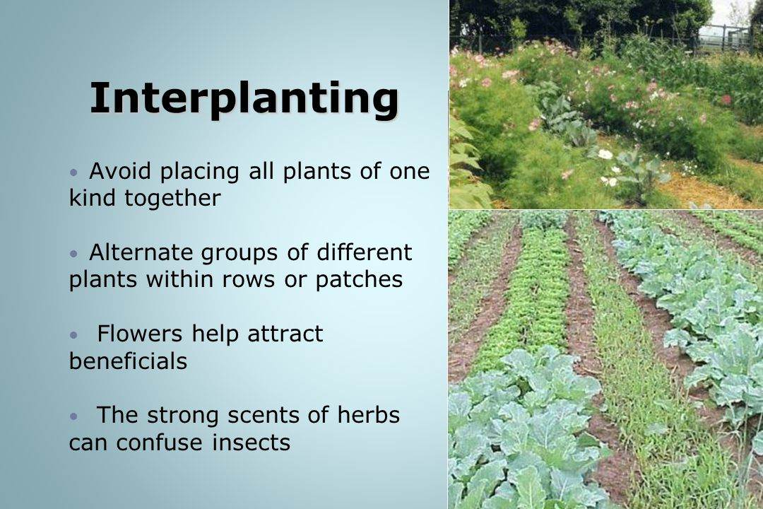 Interplanting