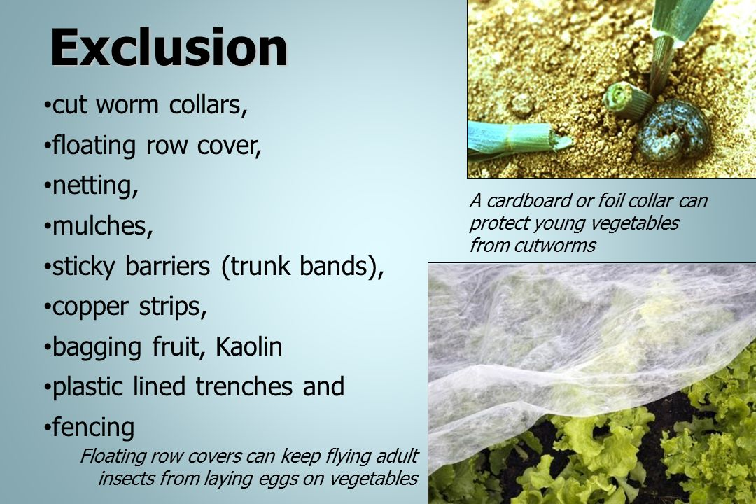 Exclusion cut worm collars, floating row cover, netting, mulches, sticky barriers (trunk bands), copper strips, bagging fruit, Kaolin plastic lined tr