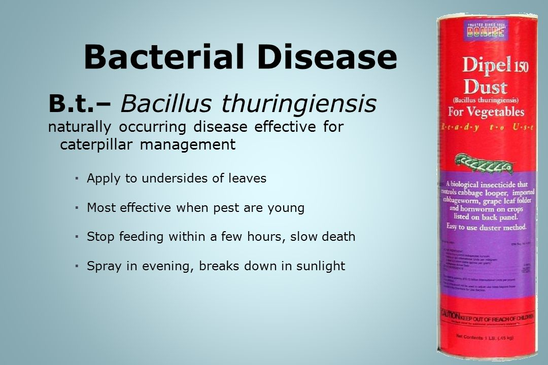 B.t.– Bacillus thuringiensis naturally occurring disease effective for caterpillar management  Apply to undersides of leaves  Most effective when pest are young  Stop feeding within a few hours, slow death  Spray in evening, breaks down in sunlight