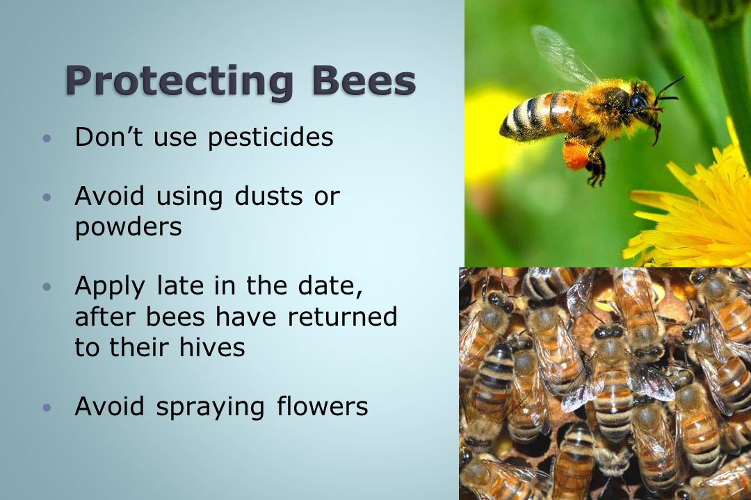 Don't use pesticides Avoid using dusts or powders Apply late in the date, after bees have returned to their hives Avoid spraying flowers