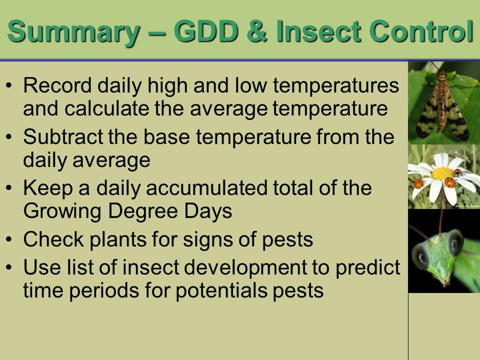 Summary – GDD & Insect Control Record daily high and low temperatures and calculate the average temperature Subtract the base temperature from the daily average Keep a daily accumulated total of the Growing Degree Days Check plants for signs of pests Use list of insect development to predict time periods for potentials pests