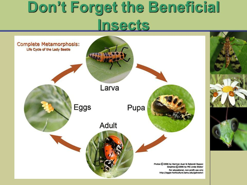 Don't Forget the Beneficial Insects